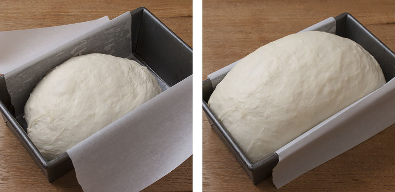 white-bread-proofing-in-pan